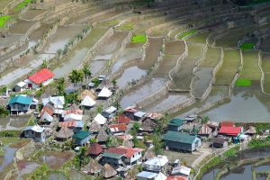 Philippines rice-field