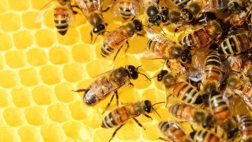 miel de fleurs