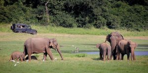 Partir au Sri Lanka pour admirer les impressionnants éléphants d'Asie